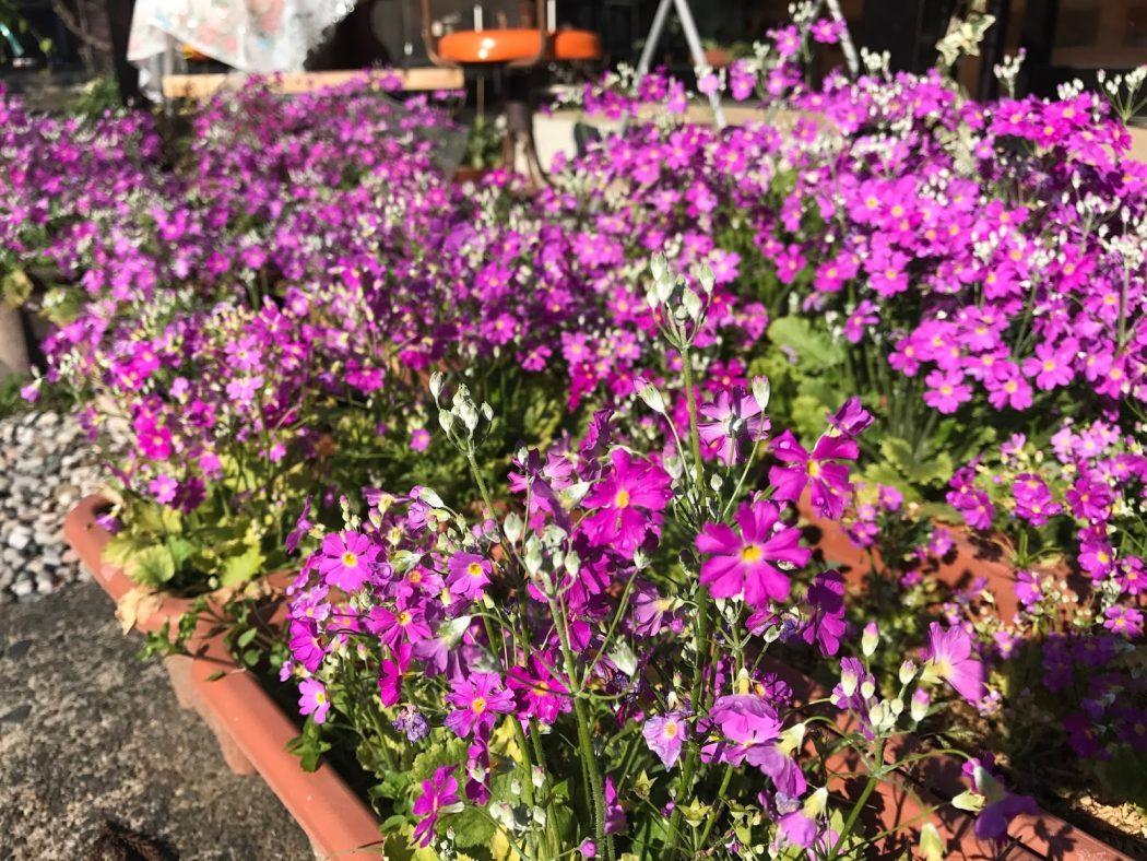 いなか日記。05『春の花ぞくぞく。』