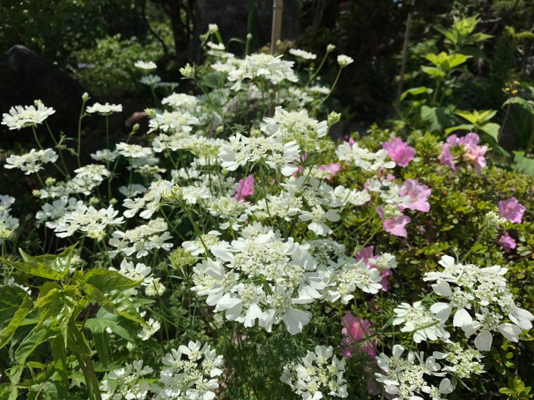 いなか日記。13『家の庭の花々_6月。』