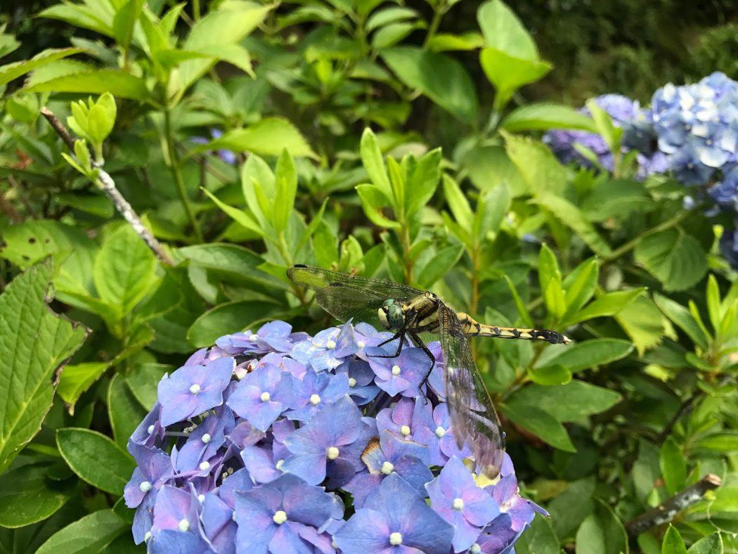 いなか日記。33『家の植物_7月とスーパーせんべい。』