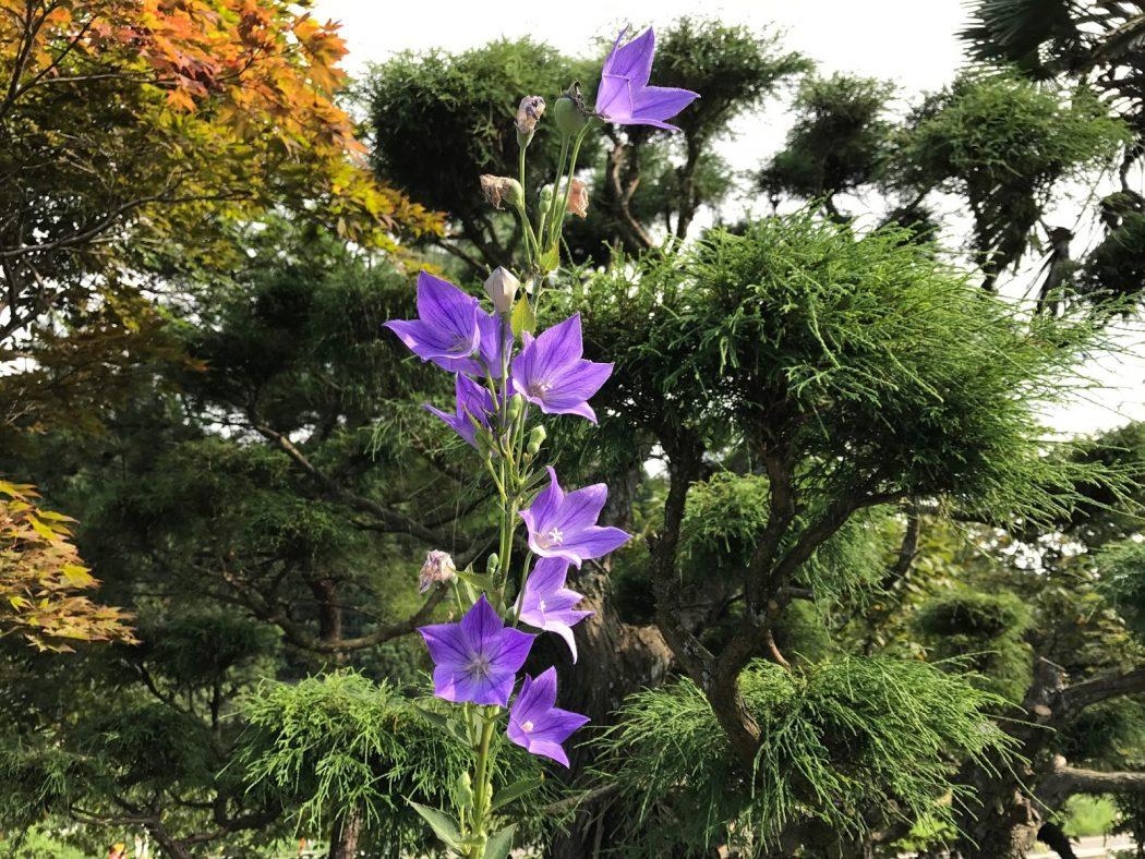 いなか日記。38『8月の庭の花々②。』