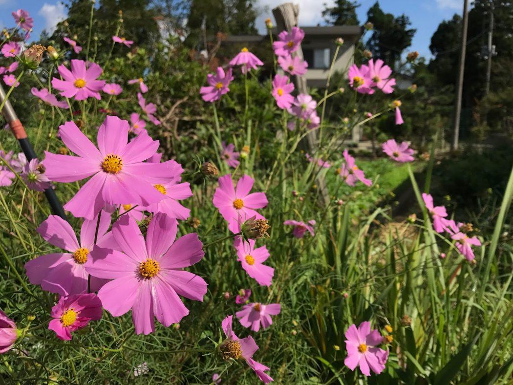いなか日記。48『9月の庭の花々。』