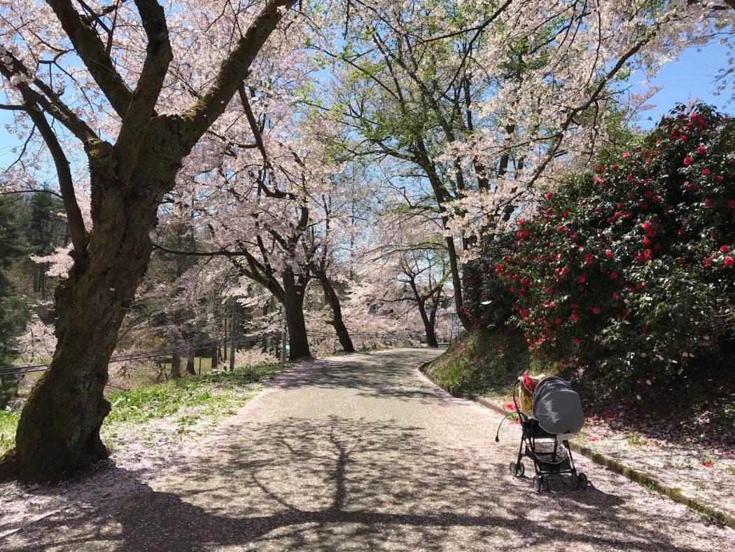 いなか日記。109『我が家の春の花々と悠久山の桜♪』
