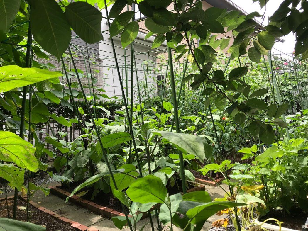 【秘訣】「グリーンと遮光カーテンの日射遮蔽」と我が家の夏の庭。