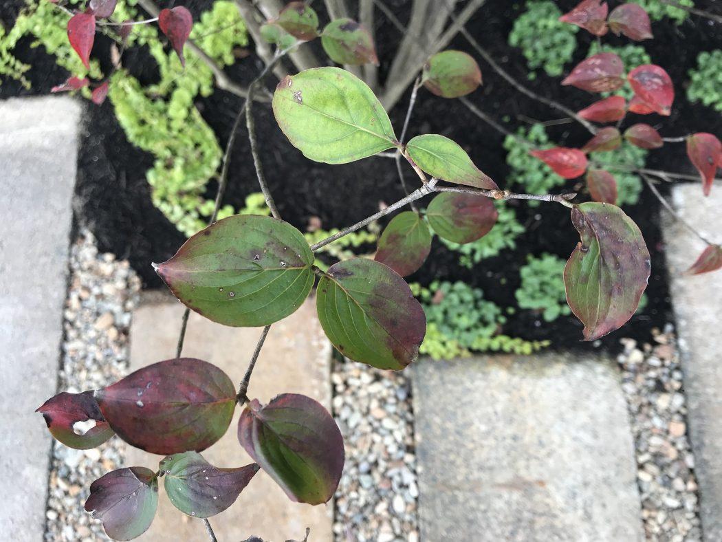 【中野のエスネル‐13】植栽の紹介。『里山の樹木とグラウンドカバー。』